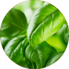 Search plant encyclopedia for herbs