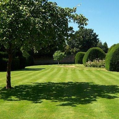 Lawn in the GardenTags plant encyclopedia