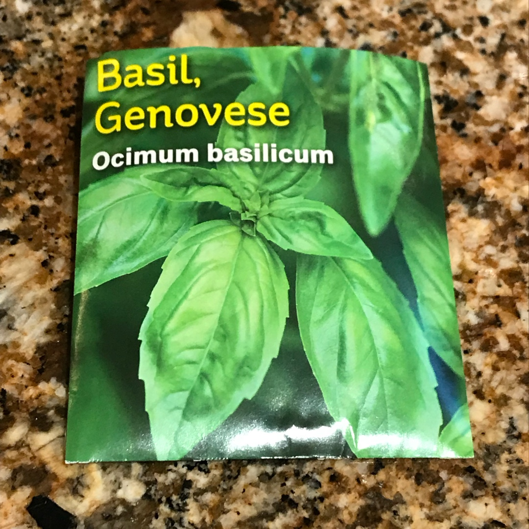 Basil Genovese in the GardenTags plant encyclopedia