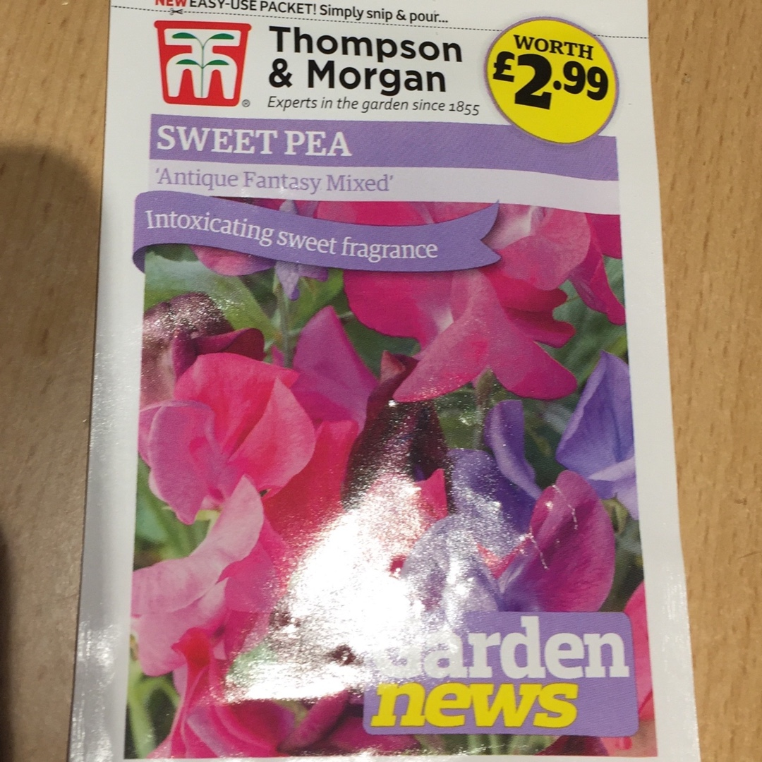 Sweet Pea Antique Fantasy Mixed (Mix) in the GardenTags plant encyclopedia