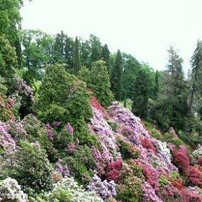 Rhododendron in the GardenTags plant encyclopedia
