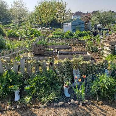 allotment 's garden