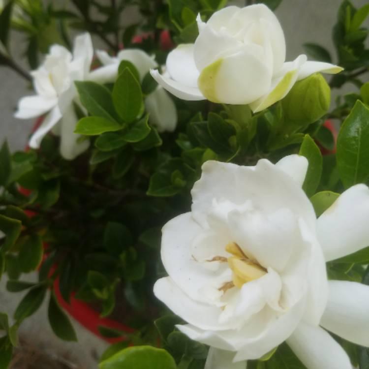 High Quality Plant Image 665843