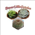 Profile Image Brees Little Garden