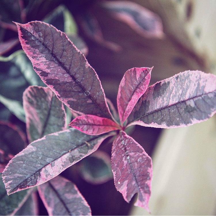 Plant Image 264764