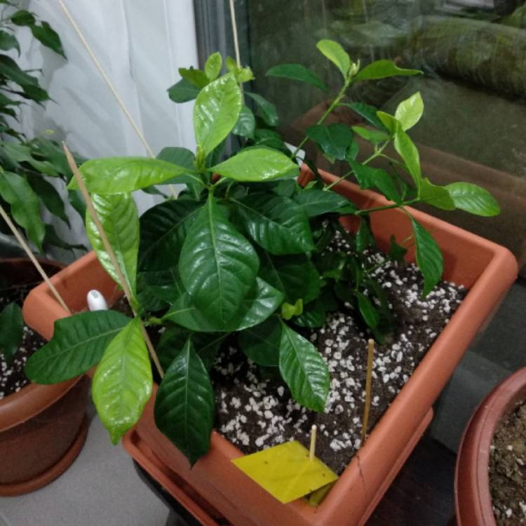 Plant Image 641777
