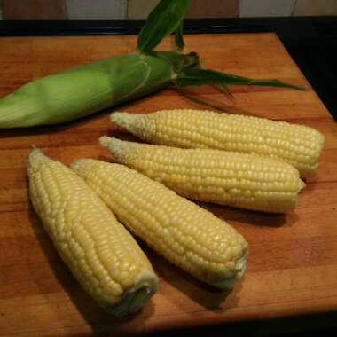 Zea mays var. saccharata 'Incredible' F1