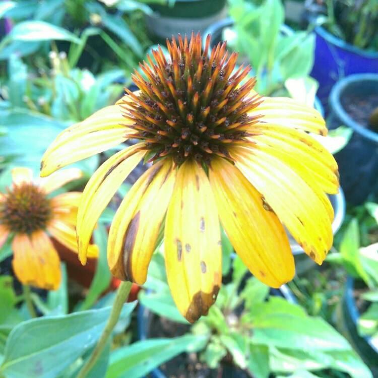 Plant Image 794276