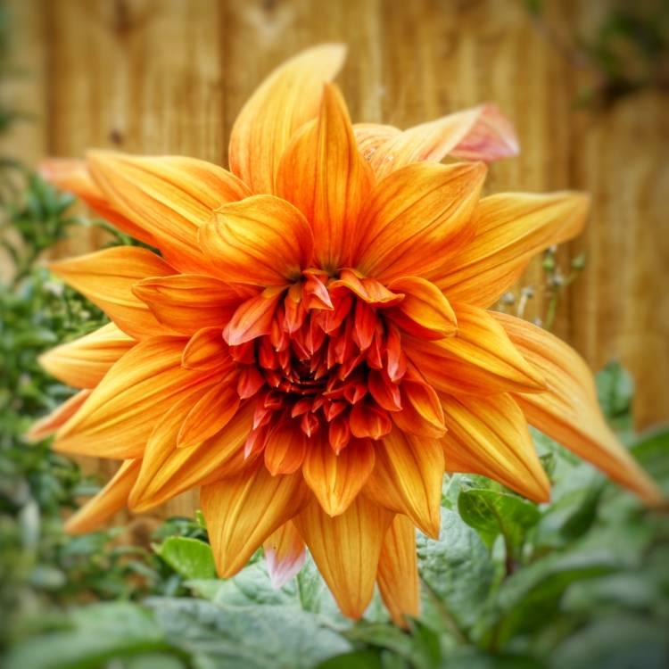 Plant Image 851200