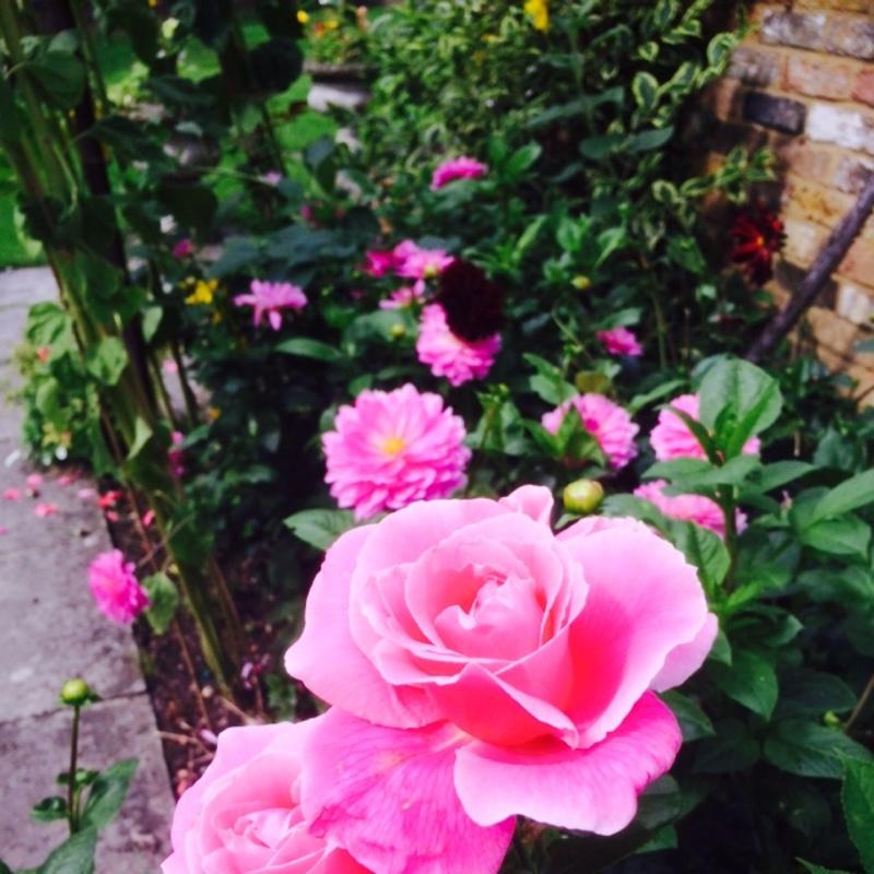 Розы Со Знаком Адр