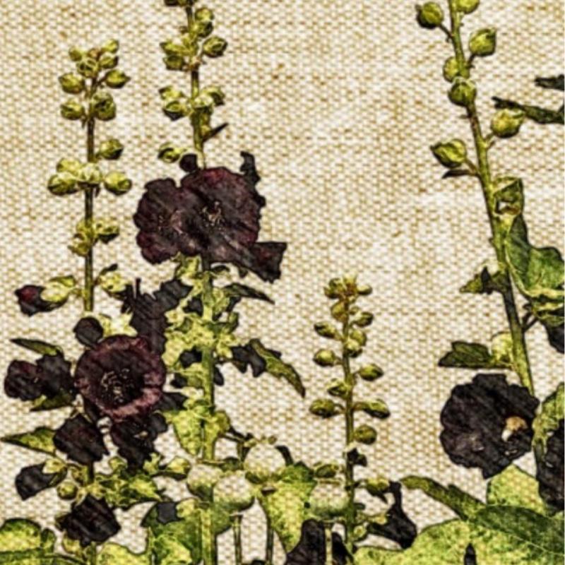 Tall Hollyhock Black Flower Alcea Rosea Nigra: Alcea Rosea 'Nigra', Black Hollyhock
